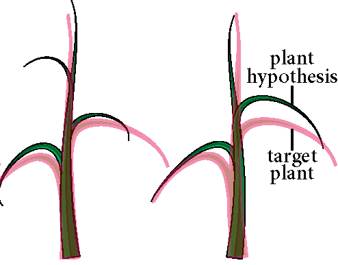Phenotyping plants